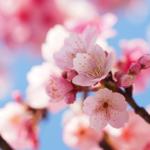 桜の名前・漢字の由来について。種類の名前の由来もご紹介!