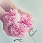 母の日にカーネーションの花を送るのはなぜ?由来は!?