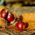 「雑学」秋の食べ物!栗の漢字の由来や英語について